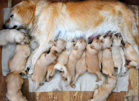 This is a cute picture now, but imagine those puppies grown up into snarling killing machines ruling your town.